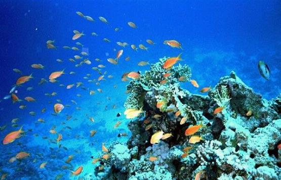 Hurghada3
