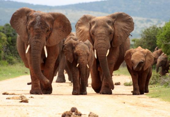 t1-circuit-si-safari-africa-de-sud-226476.jpg