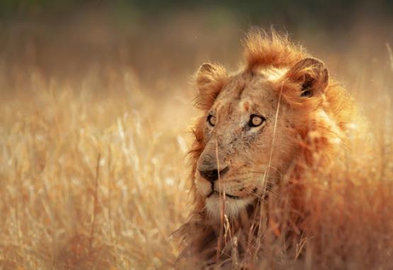 t1-circuit-si-safari-africa-de-sud-226479.jpg