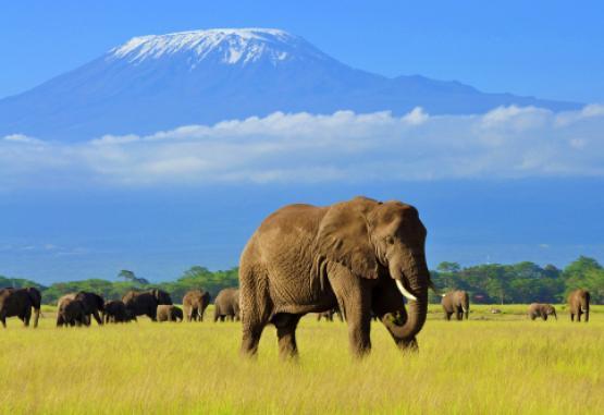 t1-safari-si-sejur-kenya-227660.jpg