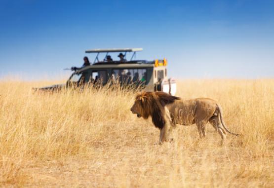 t1-safari-si-sejur-kenya-227661.jpg